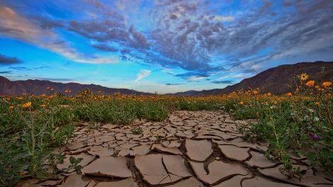 Lever de soleil sur une prairie de fleurs sauvages dans l'Anza-Borrego Desert State Park, en Californie du Sud