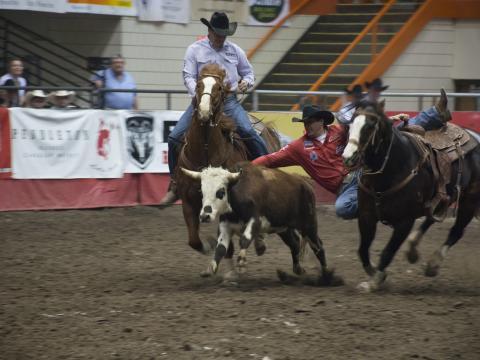 Cowboys s'affrontant pour décrocher la première place au Black Hills Stock Show & Rodeo