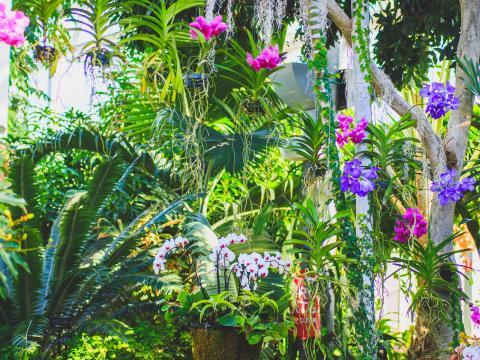 Exposition d'orchidées dans la serre Nicholas Conservatory